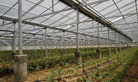 农村建光伏农业大棚需因地制宜 切莫跟风