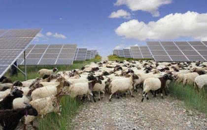 荒漠变绿洲 清洁能源让生态与经济齐发展