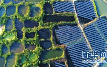 浙江湖州:生态+电力光伏遇上千年桑基鱼塘