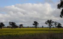 阿特斯、FRV和Enel开发的澳大利亚光伏项目获政府支持