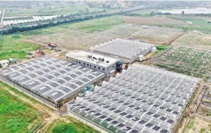 """福建首个农光旅融合项目 菜园不仅种菜还""""种电"""""""