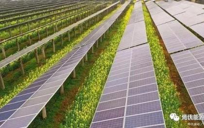 广东引进农光互补光伏发电项目,上面发电下面种植,产值约80万元