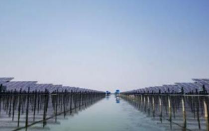 探访国电投泗洪领跑者项目——高效的秘诀
