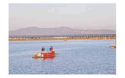 浙江玉环:海涂荒滩建光伏